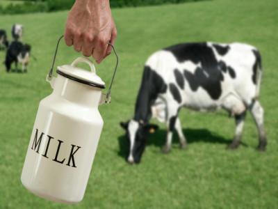 Top 5 Startup thú vị trong ngành công nghiệp Sữa