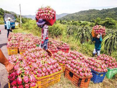 Tìm hướng gỡ khó cho xuất khẩu