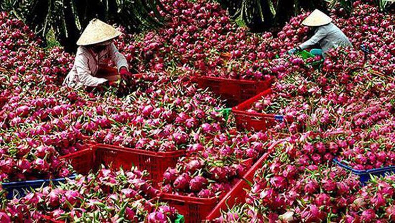 Nông sản Việt hãy chủ động đừng chờ giải cứu