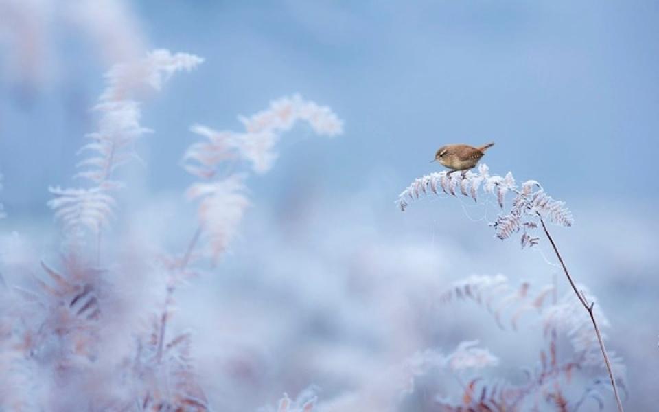 Những bức ảnh thiên nhiên hoang dã đẹp nhất tại Anh