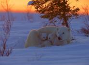Những hình ảnh ấn tượng về thiên nhiên và động vật hoang dã
