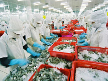 Doanh nghiệp Việt Nam xuất khẩu nông sản sang EU phải sử dụng chứng thư điện tử