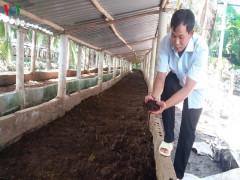 Thanh niên khởi nghiệp làm giàu từ nuôi trùn quế