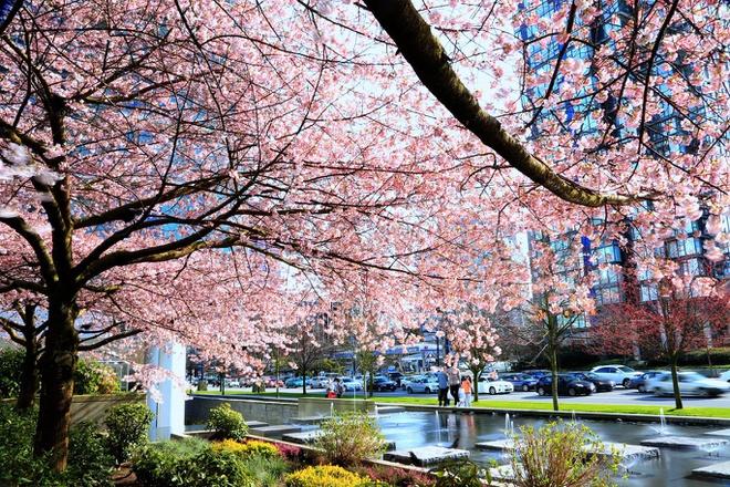 Khung cảnh mùa xuân lộng lẫy trên khắp thế giớ