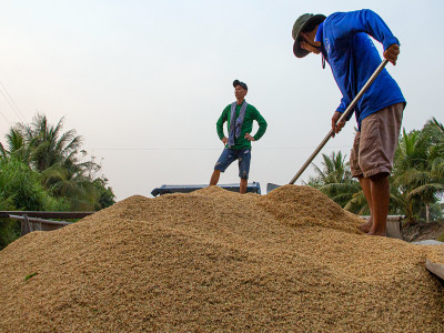Miền Tây đối mặt ùn ứ lúa gạo
