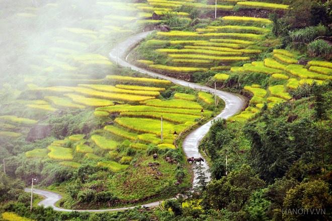 Những thửa ruộng bậc thang hấp dẫn nhất Việt Nam