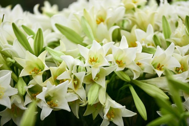 Tháng 4 - tháng của những mùa hoa đẹp đến nao lòng