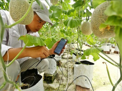 Dịch bệnh và cơ hội thúc đẩy 'số hóa' nông nghiệp