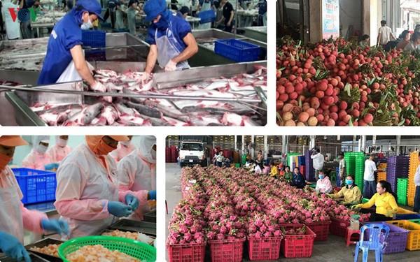 Nông sản tìm hướng tiêu thụ online trong mùa dịch