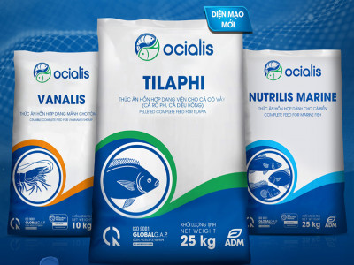 Ocialis công bố nhận diện thương hiệu mới và những cải tiến công nghệ nhằm nắm bắt cơ hội thị trường