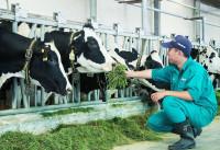 'Cú hích' nâng tầm ngành chăn nuôi