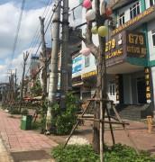 """Trồng cây xanh ở TP. Vĩnh Yên: Gói thầu hơn 8 tỷ đồng, """"cây chết"""" nhiều hơn """"cây sống"""""""