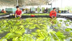 Nông sản Việt rộng đường đi xa