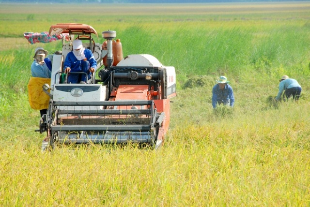 Nông nghiệp Kiên Giang có một năm bội thu