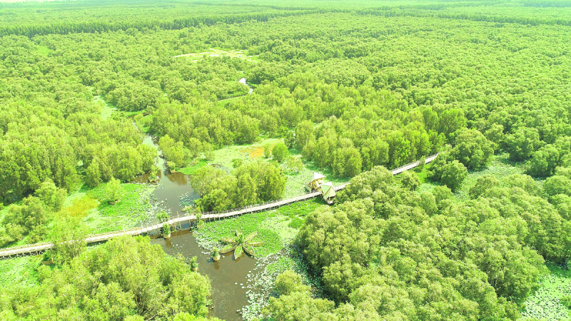Không gian xanh trù phú của Rừng Tràm Trà Sư đẹp và nổi tiếng nhất Việt Nam