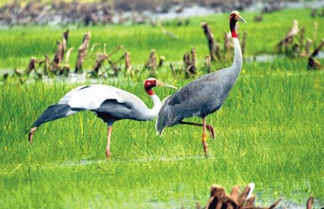 Những cá thể quý hiếm được dung dưỡng, chăm chút tại thiên đường xanh ngập nước