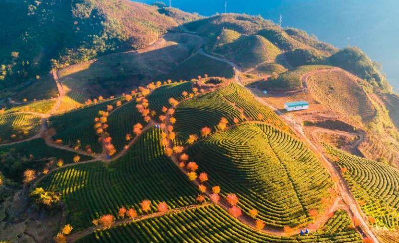 Việt Nam có nhiều điểm đến đẹp thu hút khách du lịch. Trong ảnh là đồi chè Ô Long tại Sapa (Lào Cai)