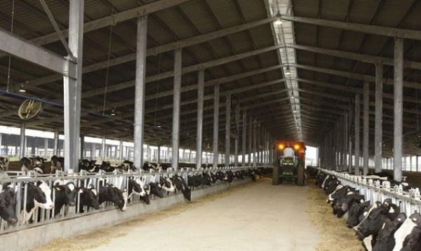 Tập đoàn TH hoàn tất nhập khẩu 4.500 con bò sữa cao sản từ Mỹ
