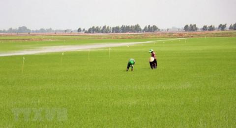 Kiên Giang phấn đấu tất cả các xã đạt chuẩn nông thôn mới trong 5 năm tới