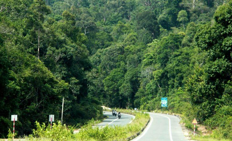 Cần chi trả dịch vụ môi trường rừng