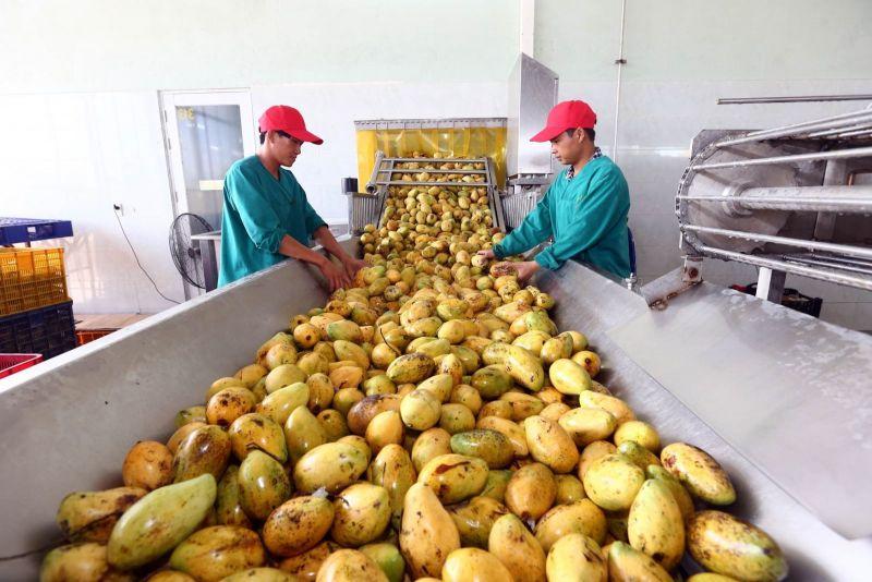 Xuất khẩu rau quả của Việt Nam được kỳ vọng sẽ lấy lại đà tăng trưởng trong năm 2020