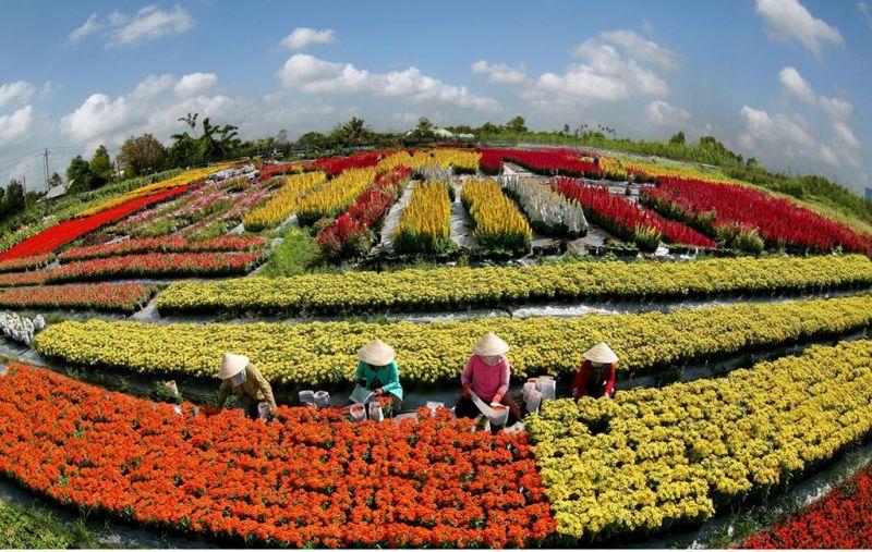 một góc làng hoa Sa Đéc