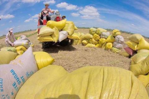 Xuất khẩu gạo có nhiều cơ hội tăng cả về sản lượng lẫn giá bán trong năm 2021