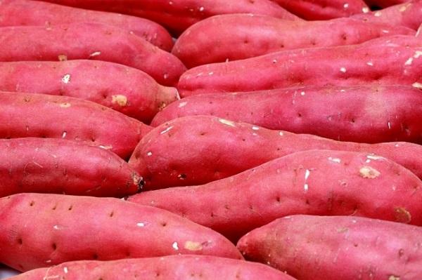 Giá khoai lang Việt xuất khẩu sang Nhật hiện đang ở mức cao