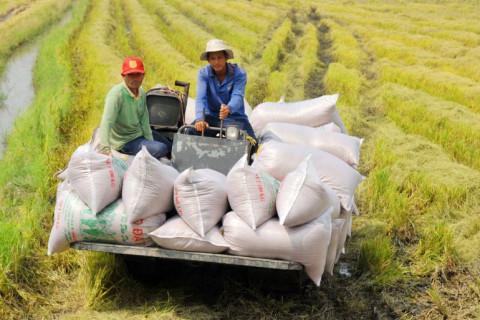 Hơn 200 thương nhân được cấp Giấy chứng nhận đủ điều kiện kinh doanh xuất khẩu gạo
