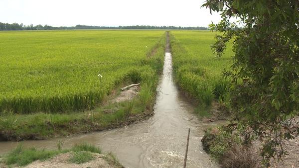 Kiên Giang: Tăng cường ứng phó với xâm nhập mặn gia tăng