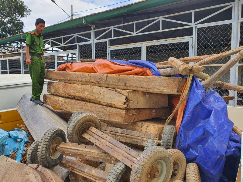 Đắk Lắk: Lại phát hiện gỗ Pơ Mu bị khai thác trái phép, tạm giữ 9 đối tượng vi phạm