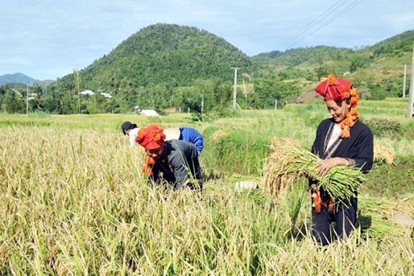 Lào Cai định hướng phát triển nông lâm nghiệp giai đoạn 2020 – 2025