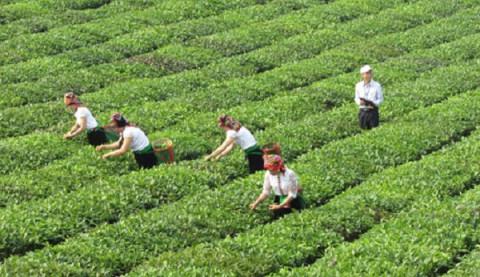 Nông nghiệp Sơn La hướng tới tham gia chuỗi giá trị toàn cầu