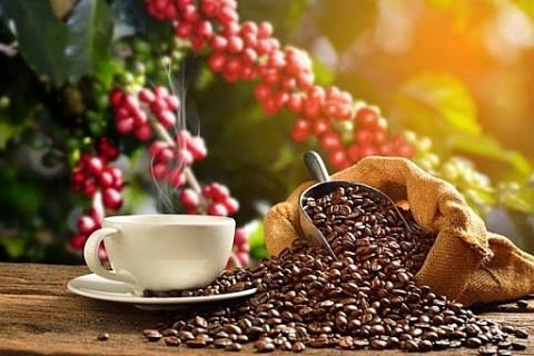 Giá cà phê giữ mức ổn định, dự báo sức mua sẽ tăng
