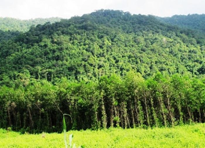 Phát triển kinh tế rừng phải gắn với tái cơ cấu ngành lâm nghiệp Ảnh: Internet