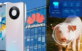 Doanh thu điện thoại Huawei giảm 60%, tự cứu cánh nhờ chăn nuôi?