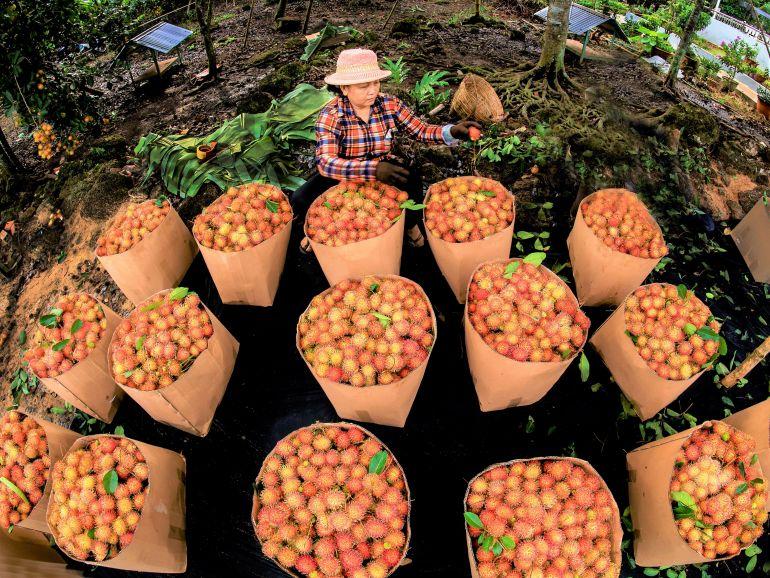 Đổi mới phương thức kinh doanh tiêu thụ nông sản theo chuỗi bền vững