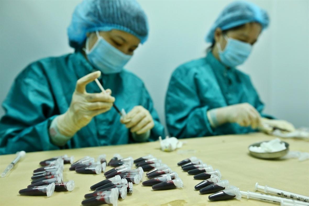 Lấy mẫu huyết thanh của chuột đã tiêm dự tuyển vắc xin COVID-19, để đánh giá khả năng sinh miễn dịch vào ngày 15/5 và 29/5. Ảnh: Minh Quyết - TTXVN
