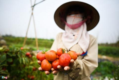 Hải Dương tiếp tục đề nghị Hải Phòng cho nông sản lưu thông xuất khẩu