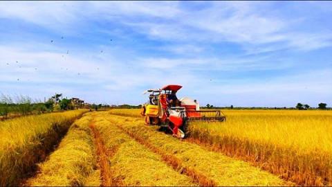 Thủ tướng Chính phủ ban hành Kế hoạch cơ cấu lại ngành nông nghiệp