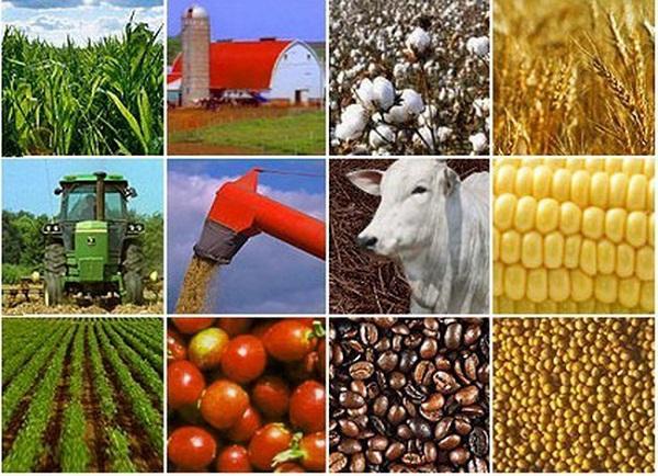 Đẩy mạnh liên kết vùng trong phát triển sản xuất nông nghiệp bền vững giữa các địa phương nhằm khai thác lợi thế, tiềm năng của mỗi vùng và của từng địa phương