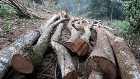 Phú Thọ: Rừng đặc dụng tại Vườn Quốc gia Xuân Sơn bị phá