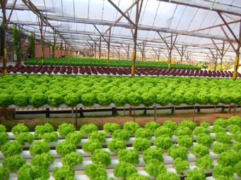 Khuyến nông tỉnh Bắc Giang: Những kết quả nổi bật và định hướng phát triển trong giai đoạn mới