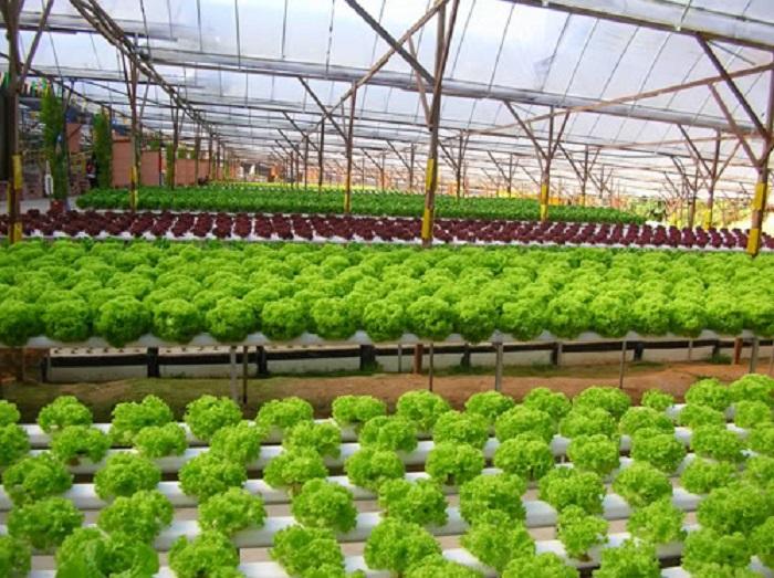 Khuyến nông tỉnh Bắc Giang với các doanh nghiệp, cơ sở công nghiệp nông thôn trong sản xuất kinh doanh, đầu tư mở rộng sản xuất và thị trường tiêu thụ sản phẩm. Ảnh: Internet
