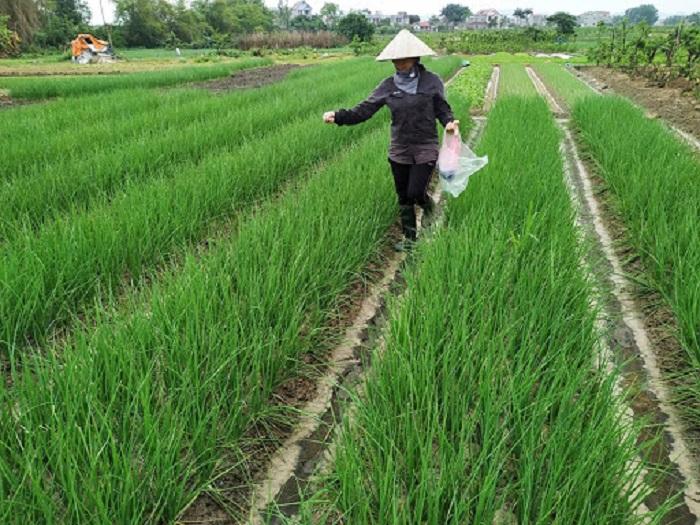 Khuyến nông Bắc Giang khuyến khích, hướng dẫn nông dân ứng dụng tiến bộ kỹ thuật, công nghệ mới. Ảnh: Internet