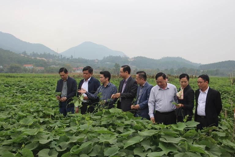 Thứ trưởng Trần Thanh Nam đã đi thăm mô hình sản xuất rau su su hữu cơ xã Hồ Sơn, huyện Tam Đảo