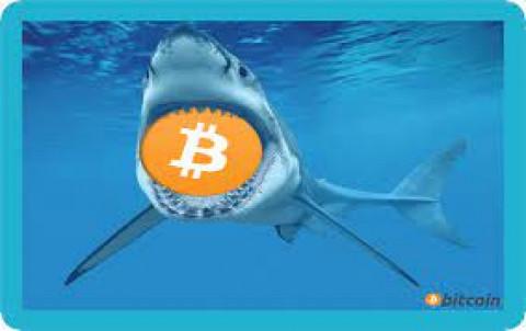Bitcoin có thể dễ bị thao túng như thế nào khi 40% vốn hóa của tiền ảo Bitcoin hiện chỉ nằm trong tay khoảng 1.000 người