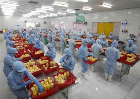 Bộ Nông nghiệp và Phát triển nông thôn: Xuất khẩu nông lâm thủy sản tăng 16,6%