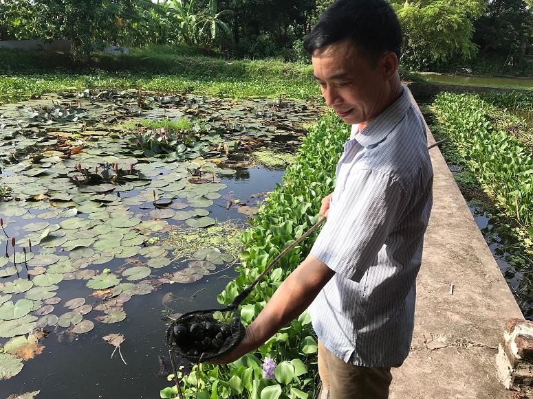 Nhờ Internet anh Lưu Bá Linh đã thực hiện thành công mô hình nuôi ốc nhồi cho thu nhập cao