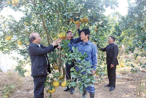 Đòn bẩy giúp phát triển kinh tế từ Quỹ hỗ trợ nông dân